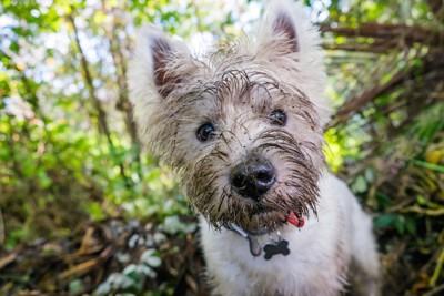 顔が泥だらけの犬