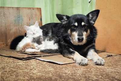 ダンボールの上に座る犬と子猫たち