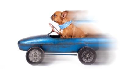 青い車を運転している犬
