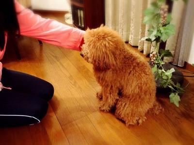犬が座ったら褒める
