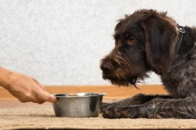 犬の前にご飯を差し出す飼い主の手