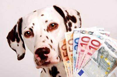 お金とダルメシアン