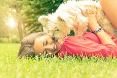 芝生に横になった飼い主の口元をなめる犬