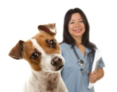 首をかしげる犬と動物看護師