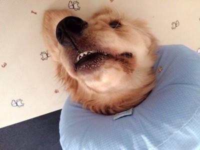 不快感を感じている愛犬