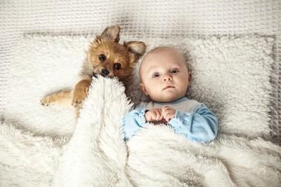 同じベッドで寝る犬と赤ちゃん