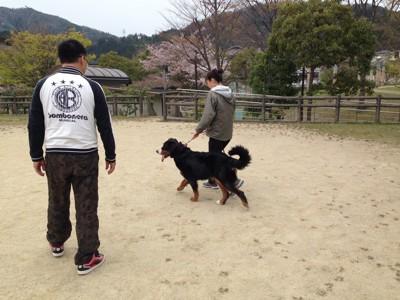 飼い主さんとトレーニング中