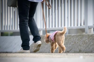 散歩中の犬と人間の後ろ姿