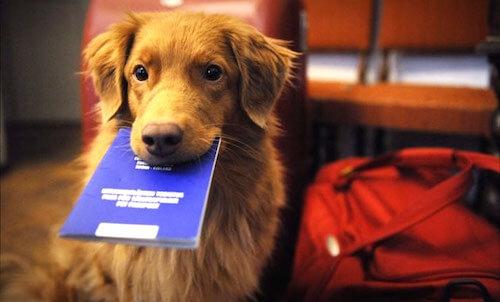 パスポートを咥える犬