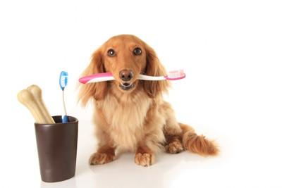 犬の歯みがきをはじめよう