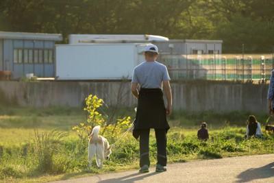 お父さんと散歩する犬
