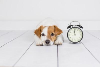 時計の隣に座る犬