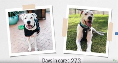 2枚の犬の写真