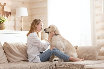 ソファーで女性の飼い主さんと見つめ合う犬