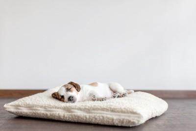 クッションの上で眠る犬