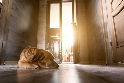 暗い廊下で寝そべる寂しそうな大型犬