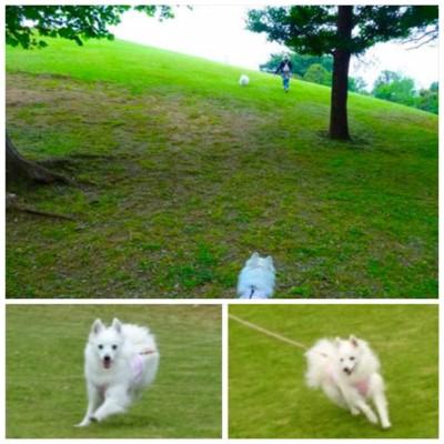 丘の上を走る犬