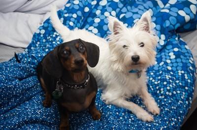 並んで見上げている2匹の犬