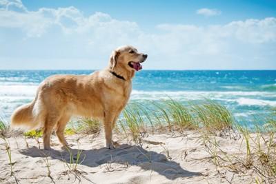 浜辺でたたずむ犬