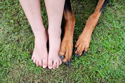 子どもと犬の足