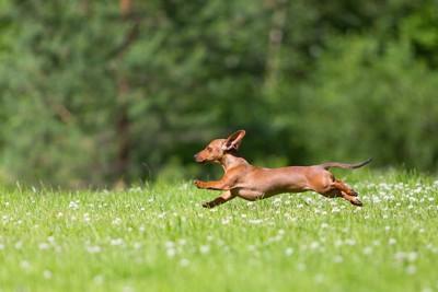 草原を思い切り走る犬