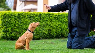庭でトレーニングする犬と男性
