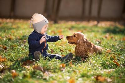 草むらにいる犬と赤ちゃん