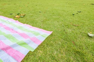 芝生に敷かれたレジャーシート
