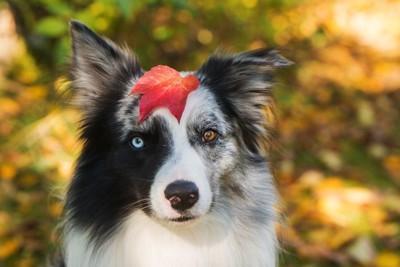 落ち葉を頭に乗せた犬
