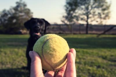 ボールを目で追う犬