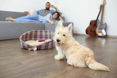 リビングで自分の居場所を考える犬