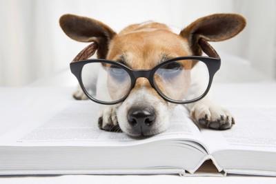 眼鏡をかけた犬