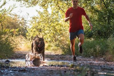 飼い主と一緒に走っている犬