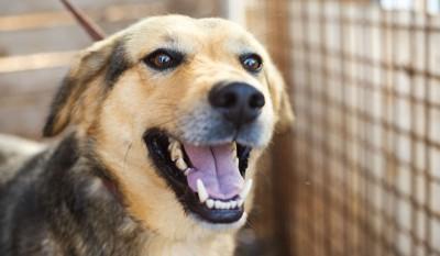 保健所で保護された犬