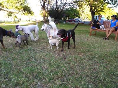 犬たちが遊んでいる写真