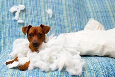 引き裂かれた枕と子犬