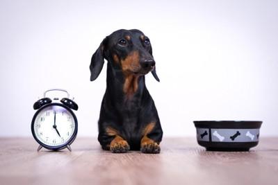 犬と時計と食器