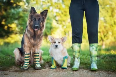 レインブーツを履いた犬二頭と人