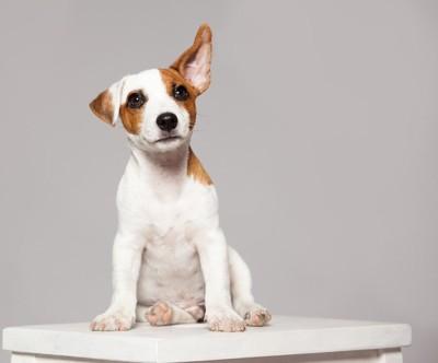 片耳を立てている子犬