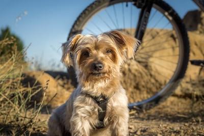 自転車の車輪と犬
