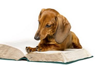 本を読むカニンヘンダックス