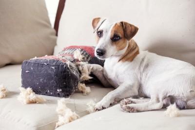 ソファーの上でクッションを破壊する犬