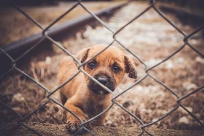 柵の向こうの子犬