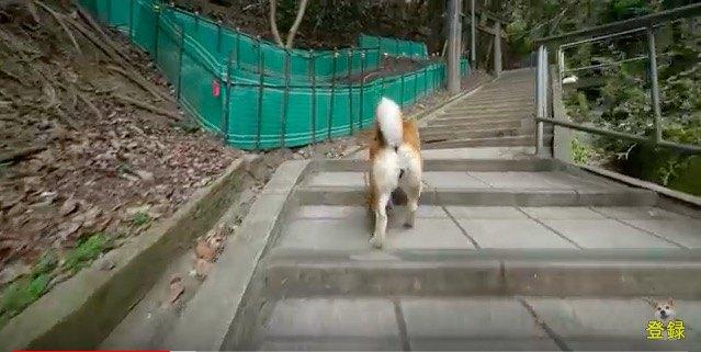 階段をズンズン