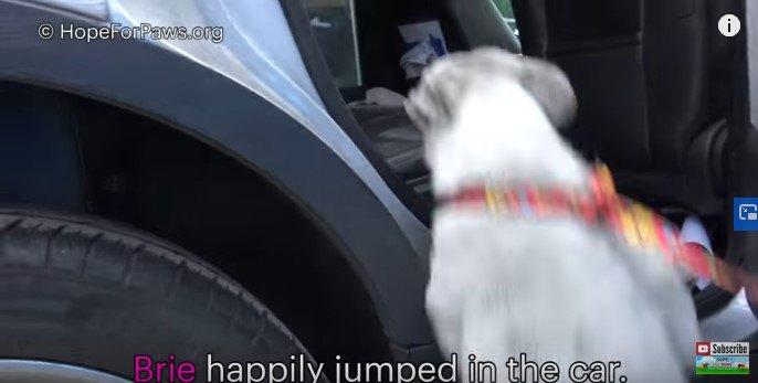 車にとび乗る犬