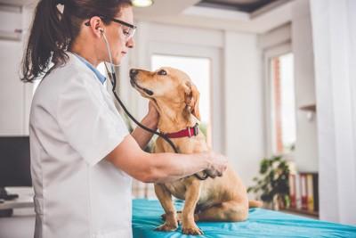 獣医さんの診察を受ける犬