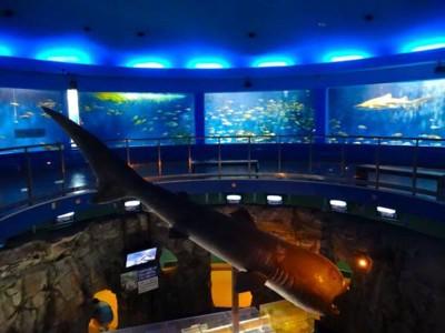 パノラマ水槽の真ん中にサメの剥製