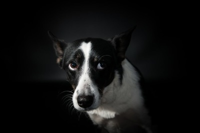 悲しそうな顔をしている犬
