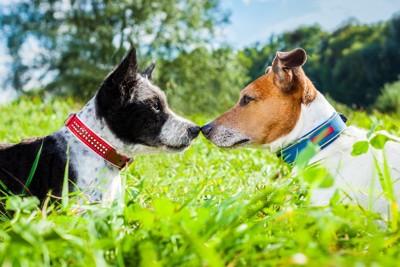 鼻をくっつける犬同士