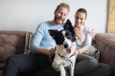 ソファーでくつろぐカップルと犬